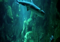 Inside the shark tank of the aquarium in La Rochelle